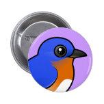 Cute Eastern Bluebird
