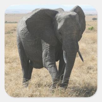 cute elephant square sticker