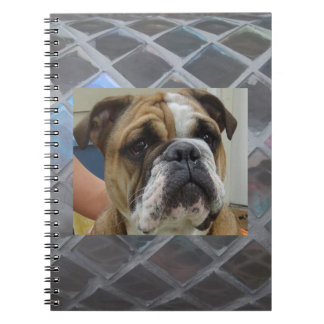 Cute English Bulldog Spiral School Notebook