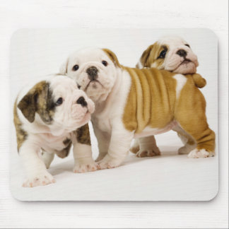 Cute  English Bulldogs Puppy Dogs Playing Mousepad