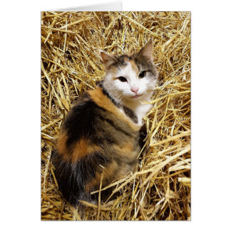 Cute Farm Cat Greetings Card
