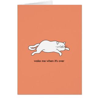 cute fat cat on a card