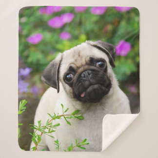 "Cute Fawn Colored Pug Puppy Dog Face Pet Photo """" Sherpa Blanket"