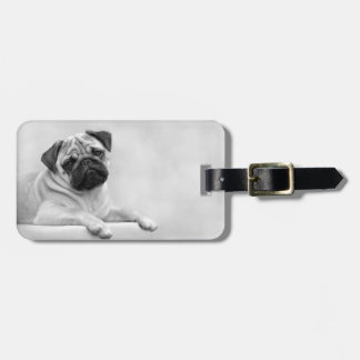 Cute Fawn Pug Dog, Black and White Luggage Tag