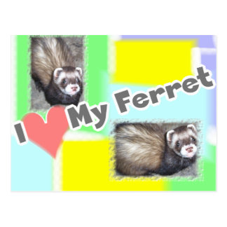 Cute Ferret Pictures Sayings and Quotes Postcard