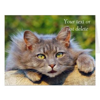 Cute fluffy cat big eyes custom greetings card