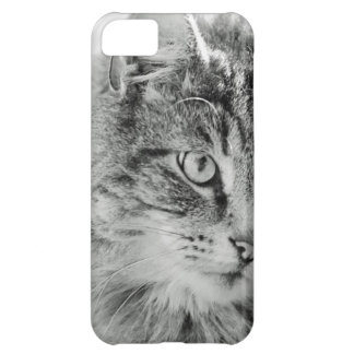 Cute Fluffy Cat Face iPhone 5C Covers