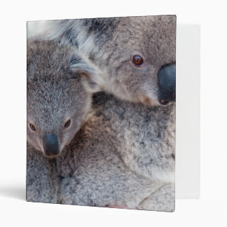 Cute Fluffy Grey Koalas 3 Ring Binders