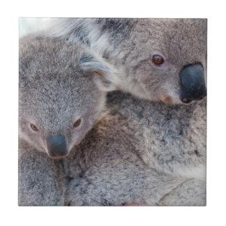 Cute Fluffy Grey Koalas Ceramic Tiles