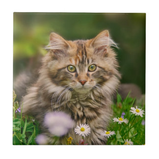 Cute Fluffy Maine Coon Kitten Cat Animal Photo --- Tile