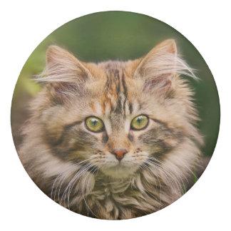 Cute Fluffy Maine Coon Kitten Cat in Flowers Photo Eraser