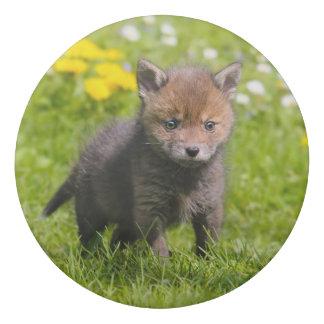 Cute Fluffy Red Fox Kit Cub Wild Baby Animal Photo Eraser