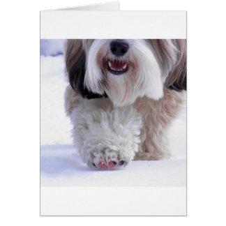 Cute Fluffy Tibetan Terrier Snow Paw Card