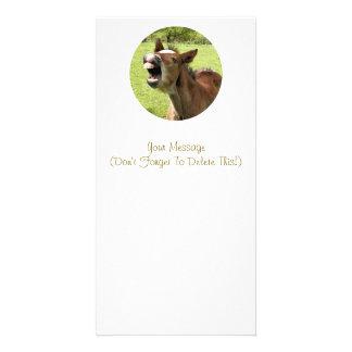 CUTE FOAL CARD
