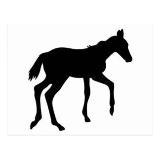 Cute foal horse postcard