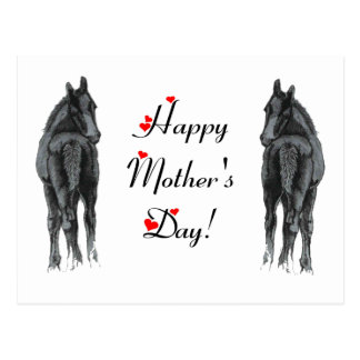 Cute Foal Mother's Day Postcard