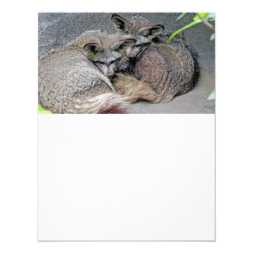 Cute Fox Couple Sleeping Photo Personalized Invite
