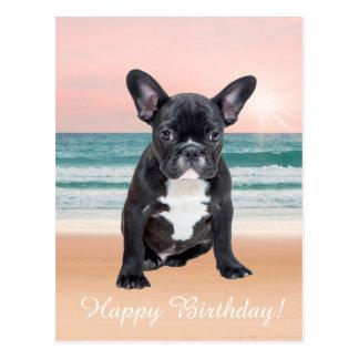 Cute French Bulldog Beach Sun Water Postcard