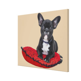 Cute french bulldog on pillow canvas print