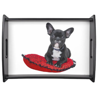 Cute french bulldog on pillow serving tray