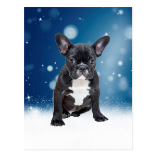 Cute French Bulldog Snow Stars Blue Christmas Postcard