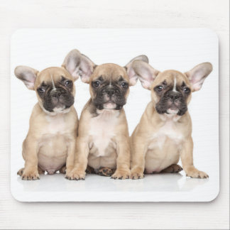 Cute French Bulldogs Mouse Pad