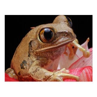 Cute Frog On Flower Postcard