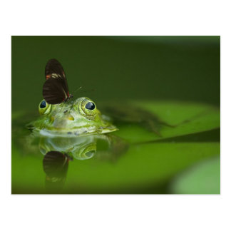 Cute frog with a Butterfly on his nose Postcard