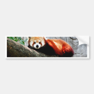 cute funny animal red panda bumper sticker