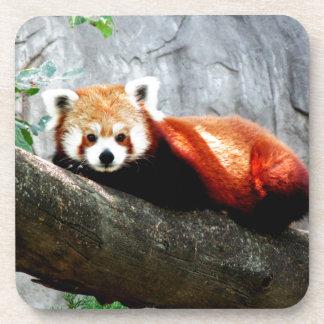 cute funny animal red panda coaster
