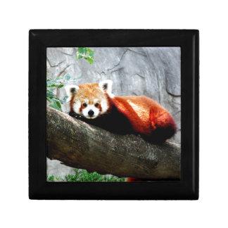 cute funny animal red panda gift box