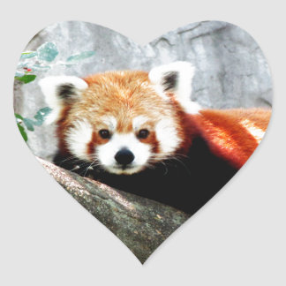 cute funny animal red panda heart sticker