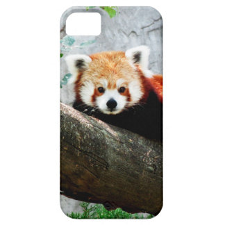 cute funny animal red panda iPhone 5 covers