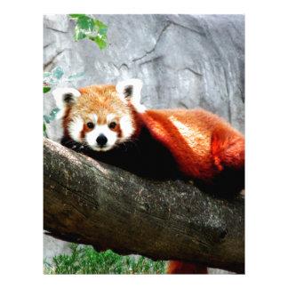 cute funny animal red panda letterhead