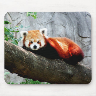 cute funny animal red panda mouse pad