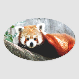 cute funny animal red panda oval sticker
