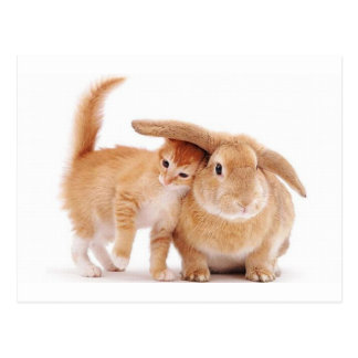 cute_funny_animals_8  kitten bunny rabbit friends postcard