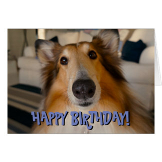 Cute funny collie birthday card