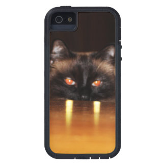 Cute, funny, vampire cat case for the iPhone 5