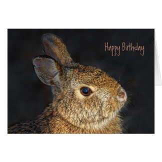 Cute Furry Bunny Rabbit in Sunlight Card