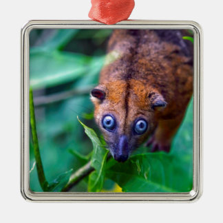 Cute furry cuscus possum looking at camera Silver-Colored square ornament