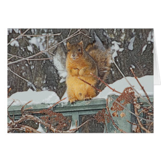 """CUTE, FURRY SQUIRREL"" BLANK GREETING CARD"