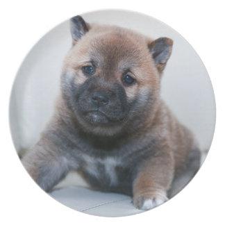 Cute Fuzzy Puppy Dog Plate