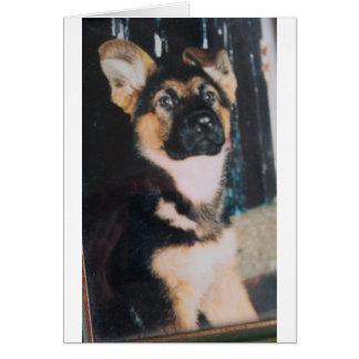 Cute German Shepherd Puppy Card