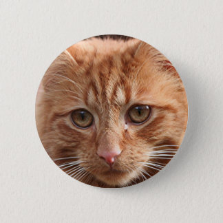 Cute ginger cat 2 inch round button