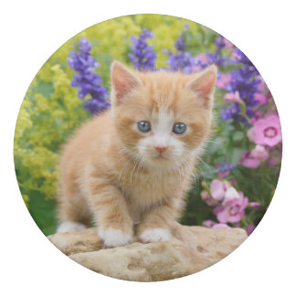 Cute Ginger Cat Kitten in Flowery Garden Portrait Eraser
