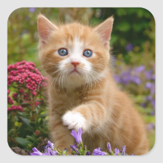 Cute ginger kitten in a garden square sticker