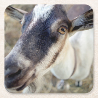 cute goat farm animal square paper coaster