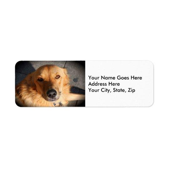 Cute Golden Retriever Dog