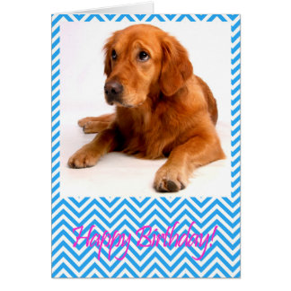 Cute Golden Retriever Dog Happy Birthday Card